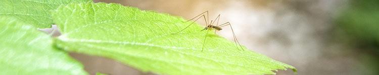 Insektenstiche behandeln