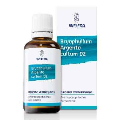 Bryophyllum Argento Cultum Dilution D2  bei deutscheinternetapotheke.de bestellen